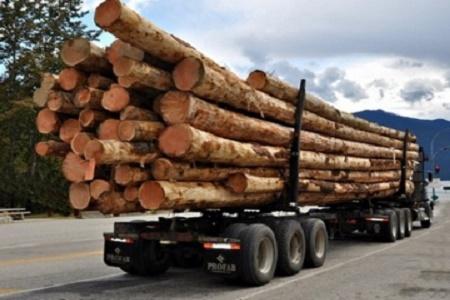 На Тернопільщині викрили злочинну схему торгівлі деревиною