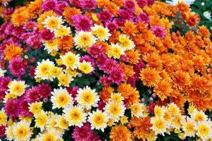 На Тернопільщині росте квітка, якою лікують від алкоголізму