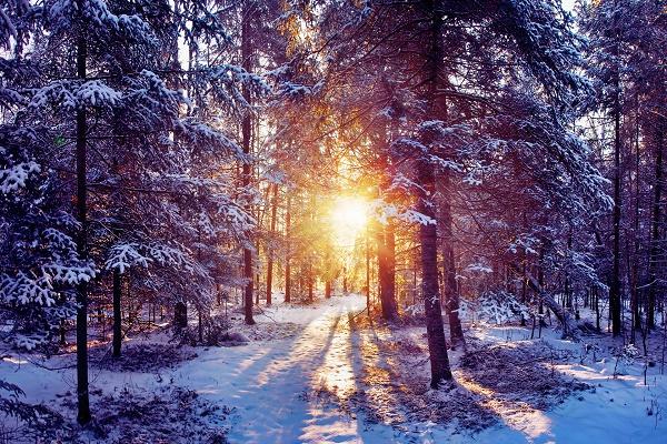 Лютої зими цього року не буде, навпаки, очікують теплішу, ніж зазвичай