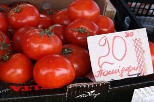 Заліщицькі помідорники цогоріч зажирують