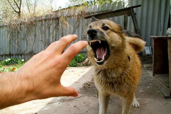 На Тернопільщині собаки все частіше нападають на людей