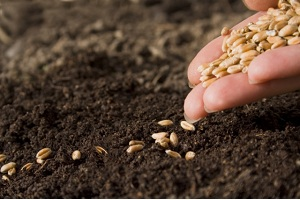 Вартість цьогорічної посівної для тернопільських аграріїв зросла на 70%