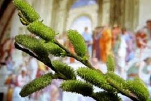 Християни східного обряду сьогодні, 5 квітня, святкують Вербну неділю