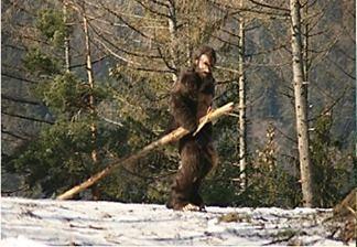 Чугайстер - Карпатська снігова людина